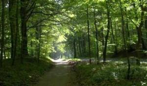 marselisborg-skovene