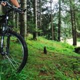 skov-cykel